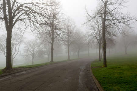 Foggy Morning on a tree-lined winding path at the park in Portland Oregon Stock Photo