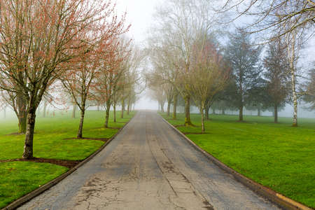 Foggy Morning on a tree-lined path at the park in Portland Oregon
