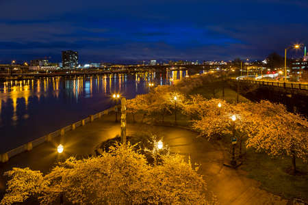 northwest: Cherry Blossom Trees Spring Flowers in Bloom along Portland Oregon downtown waterfront park during blue hour Stock Photo