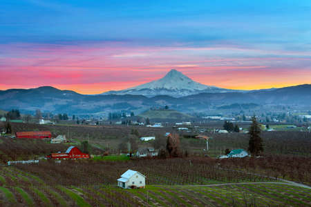 tree farming: Mount Hood over Hood River Valley Orchard Farmland during Sunset