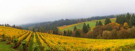 Dundee Oregon Winery Vineyard in fall season during one foggy morning panorama