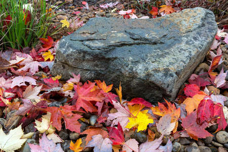 Maple tree leaves fallen on ground by rock in garden backyard during autumn season Stock Photo
