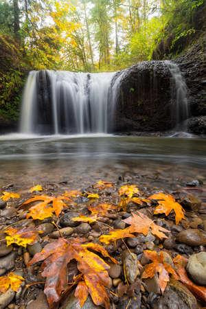Maple tree leaves on rocks at Hidden Falls in Clackamas Oregon during fall season Stock Photo
