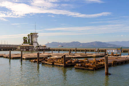 Sea Lions basking in the sun on floating dock at Pier 39 in San Francisco California Stock Photo