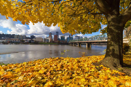 Fall Foliage under the Maple tree with Portland Oregon city skyline by Hawthorne Bridge along Willamette River Stock Photo
