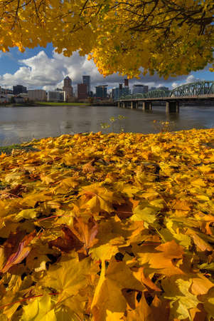 Fall Foliage under the Maple tree with Portland Oregon city skyline by Hawthorne Bridge