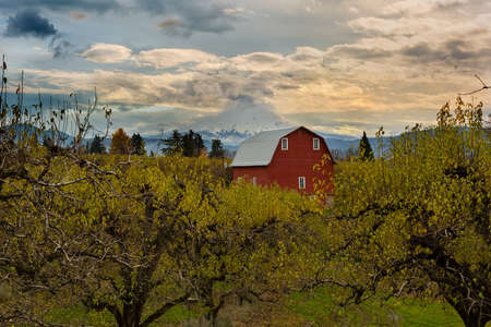 Red Barn by Mount Hood at Pear Orchard in Hood River Oregon during Fall Season