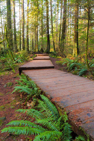 Wood walkway path hiking trail in Lynn Canyon Park in Vancouver British Columbia Canada