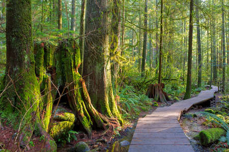 Wood walkway path hiking trail through forest in Lynn Canyon Park in the municipal of British Columbia Canada