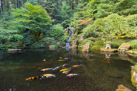 Koi Fish swimming in pond by Heavenly Falls waterfall in Japanese Garden