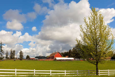 Cattle Ranch and Sheep Farm with Red Barn and White Picket Fences in Rural Clackamas Oregon