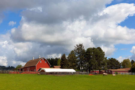 Cattle Ranch and Sheep Farm with Red Barn in Rural Clackama Oregon Stock Photo