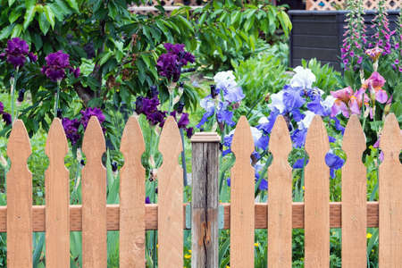 Wood Picket Fence in backyard garden with colorful Iris flowers in bloom during spring season