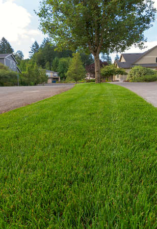 Parking Strip with mowed manicured green grass lawn in suburban neighborhood closeup