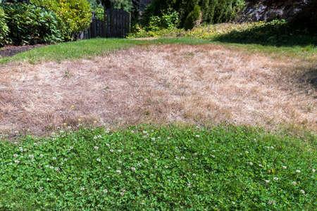Unkempt garden yard with dried grass clover weeds Stock Photo