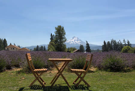 Beautiful sunny blue sky day at Scenic Lavender farm in Hood River Oregon during summer season