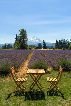 Beautiful sunny blue sky day at Lavender field in Hood River Oregon during summer season
