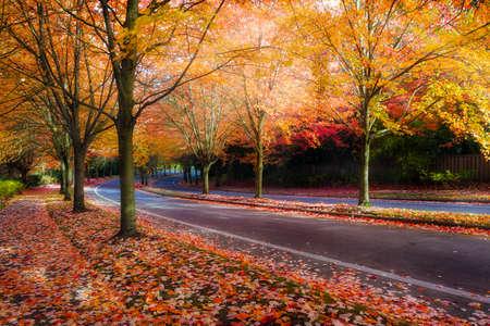 Alberi di acero fiancheggiata da curve tortuose strada con fogliame di autunno durante la stagione autunnale in Oregon