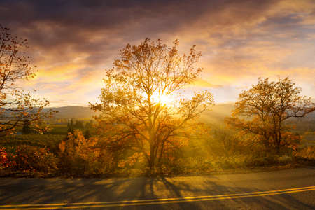 Sun rays through trees along the countryside road on a fall day during evening sunset in Hood River Oregon