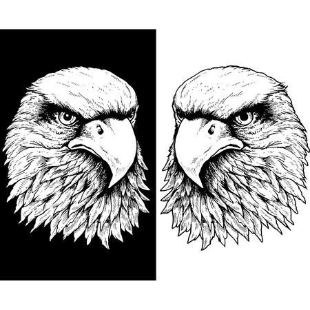 vector illustration: HAWK HEAD LINE