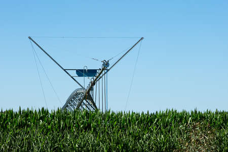 irrigating: A Lateral Move Irrigation System, sometimes called a Linear Move, Wheelmove or Side Roll System, irrigating crops in Australia. These systems are often 500 meters to 1000 meters long.