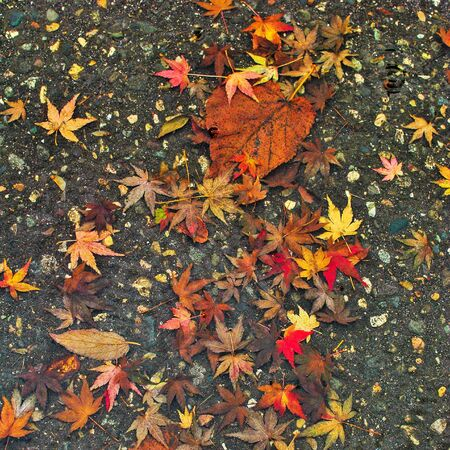 fallen: Yellow leaves fallen on the asphalt Stock Photo