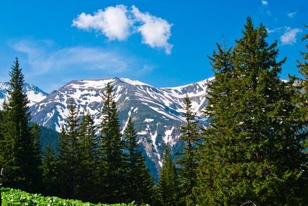 fagaras: In Romania centrale si trovano i Monti Fagaras (in rumeno montagne Fagaras). Fanno parte dei Carpazi. Archivio Fotografico