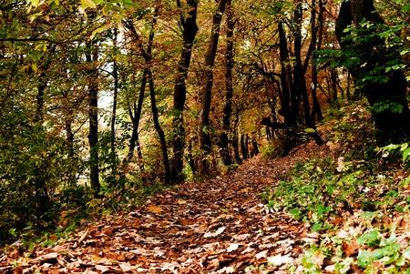 An autumn landscape with a forest path. Reklamní fotografie - 9709279