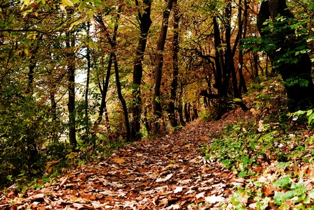 An autumn landscape with a forest path.