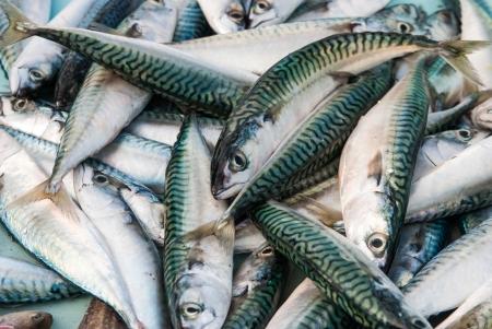 produits alimentaires: Poissons de mer frais sur le marché aux poissons de Marseille, France