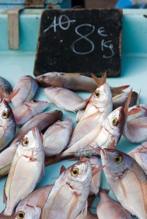 seafish: Fresh seafish on the fish market in Marseille, France