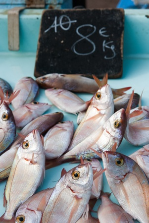 Fresh seafish on the fish market in Marseille, France