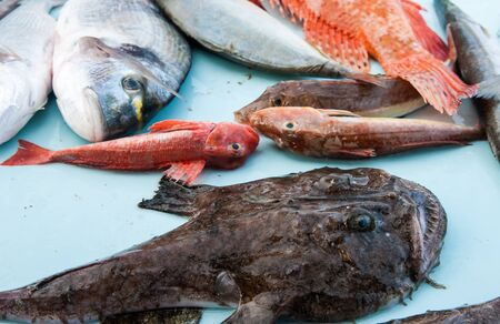 seafish: Soetiments of fresh seafish on the fish market in Marseille, France