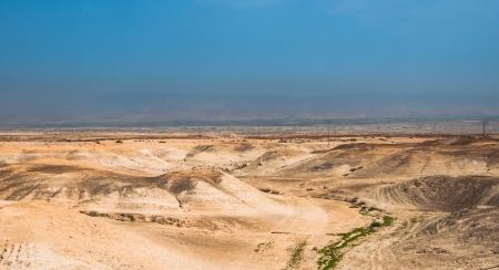 judaean: Shelter and palm tree in Judaean Desert