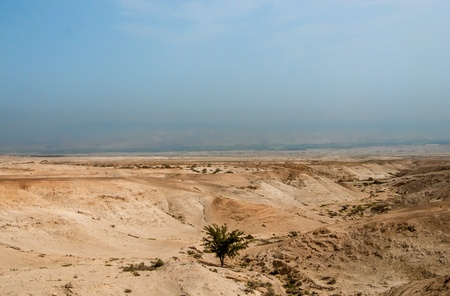 judaean desert: Lonely tree down into a valey of Judaean Desert Stock Photo