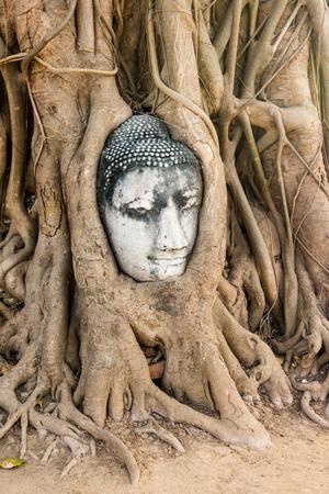 Wat Mahathat Buddha head in tree, Ayutthaya Stock Photo - 27321158
