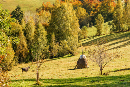 Hay stack in countryside in a romanian villlage at the food of Piatra Craiului Mountains. photo