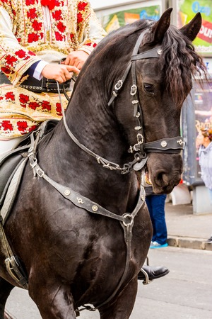 permitted: Brasov Romania April 19 2015: Black horse during the traditional parade Juni Brasovului marking the only day of the year when Romanians were permitted to enter in the Saxon town of Kronstadt .