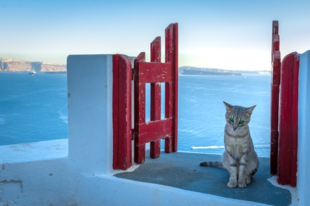 Santorini island, Greece: Landmark detail of a gate with a beautiful cat over the caldera Caldera, Aegean sea.