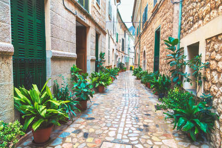 Narrow steet of seaside town with flower alley. Lot of green flowers along the street