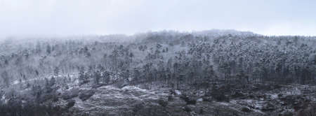 panorama view of a forest hill with snow covered trees