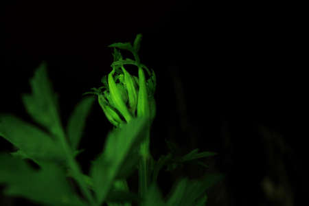 close up of a plant at night