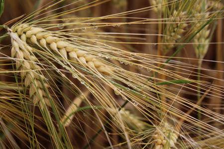 agricultural plant detail