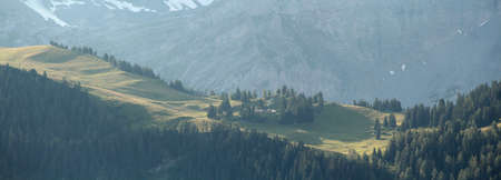 alpine scenery with forest ridge in summer