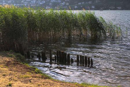 reed at a lakeshore