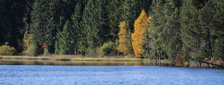 natural lakeshore with forest trees in bright autumn colors
