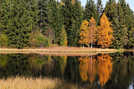 colorful autumn trees by the shore of a lake Banco de Imagens
