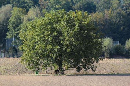 Tree on a Field Banco de Imagens