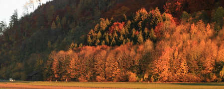 trees at a forest edge in autumn
