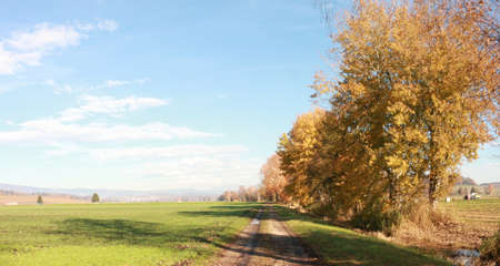 rural landscape with country road and trees